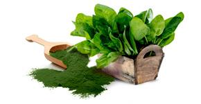 Food Ingredients - Espinafre