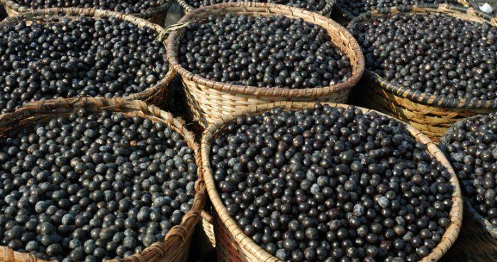 acai-nutrimental-super-frutas-beneficios-do-acai