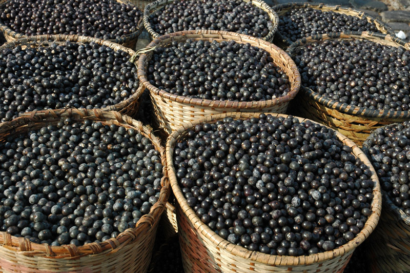 acai-nutrimental-super-frutas-beneficios-do-acai
